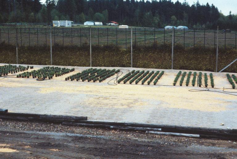 timeline-Strawberry-Germplasm-Trials-May-1986-photog-unknown