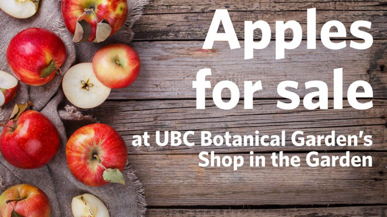Apples for sale at UBC Botanical Garden's Shop in the Garden
