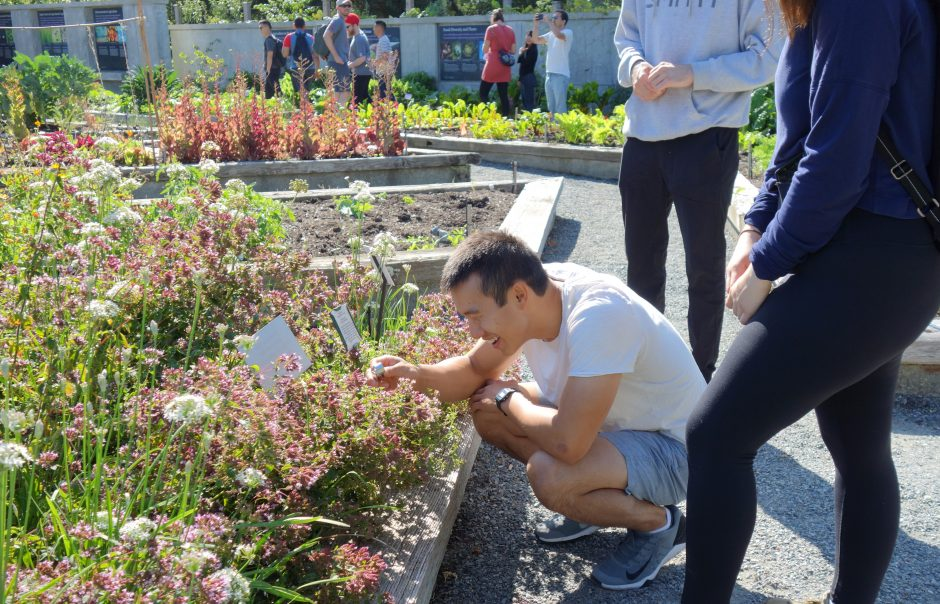 Masters of Geomatics for Environmental Management (MGEM) student smiling and inspecting colourful and flowering plants in UBC Botanical Food Garden