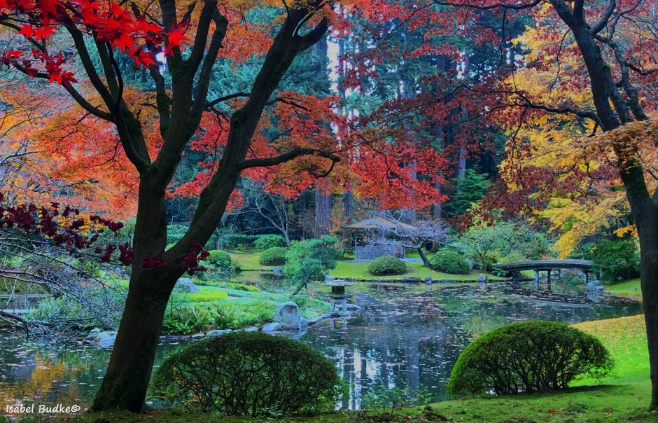Nitobe Memorial Garden - autumn trees in foreground and pond in greenery in background