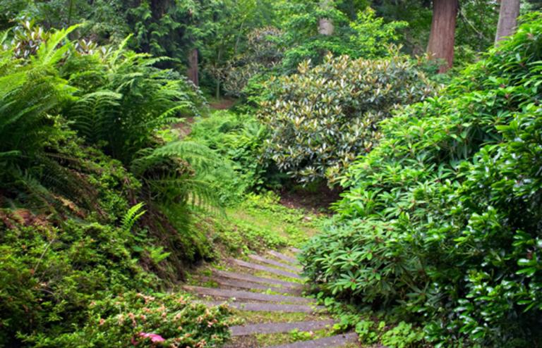 Garden path through lush green vegetation