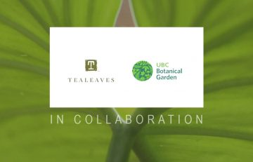 TEALEAVES and UBC Botanical Garden logos on semi-transparent white banner, large-leafed plant in background. Text: IN COLLABORATION