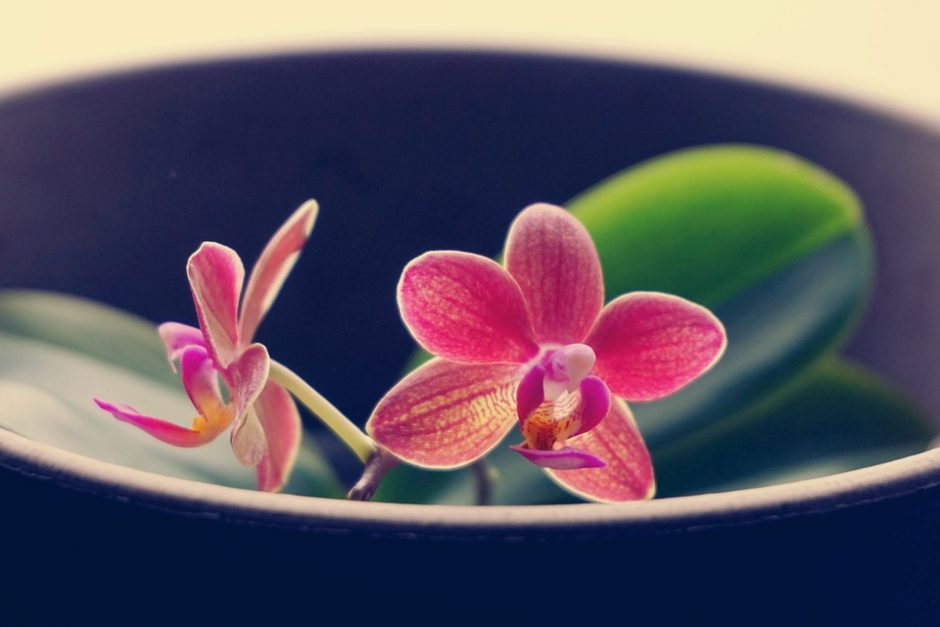 orchids growing in shallow bowl