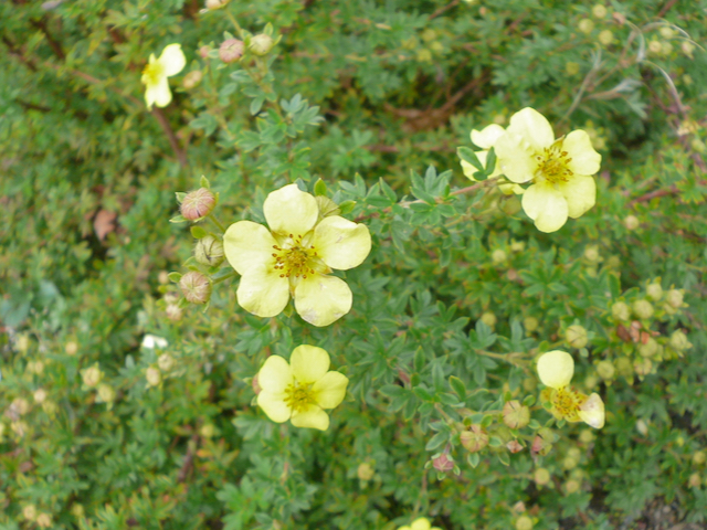 Small pale yellow flowers emerge from tiny spiky-leaved plant