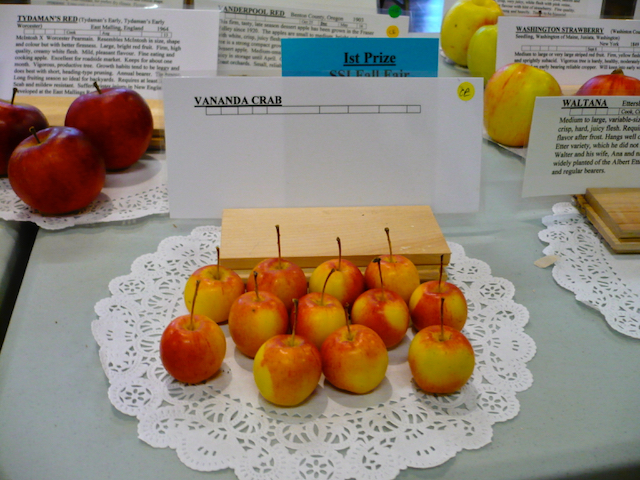 Apples presented on table