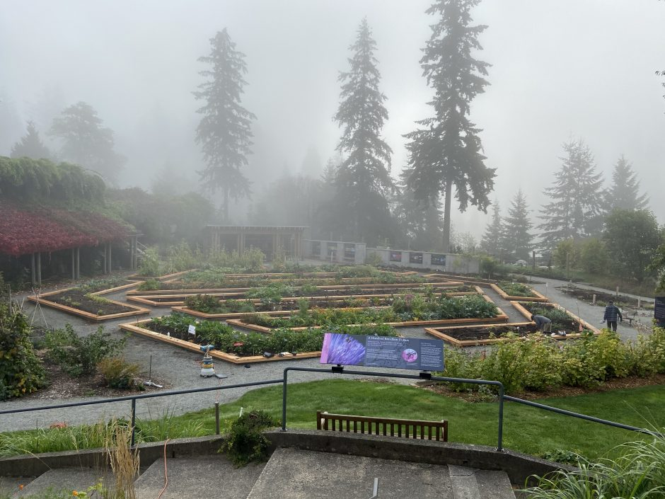 A misty high vantage point view of the Food Garden at UBC Botanical Garden