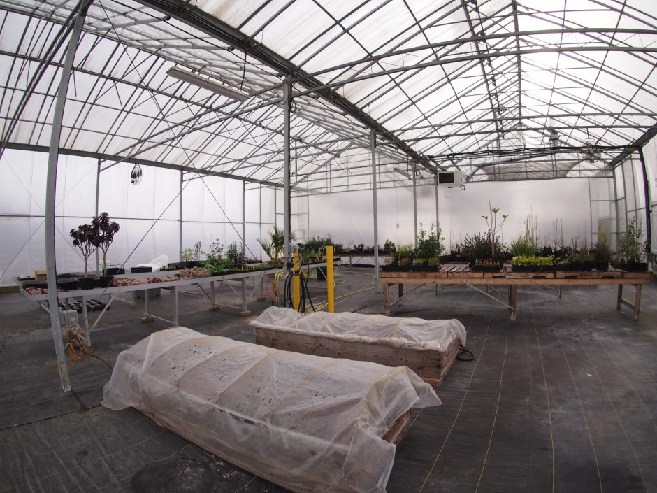 Inside big greenhouse with beds covered in tarp and tables of plants