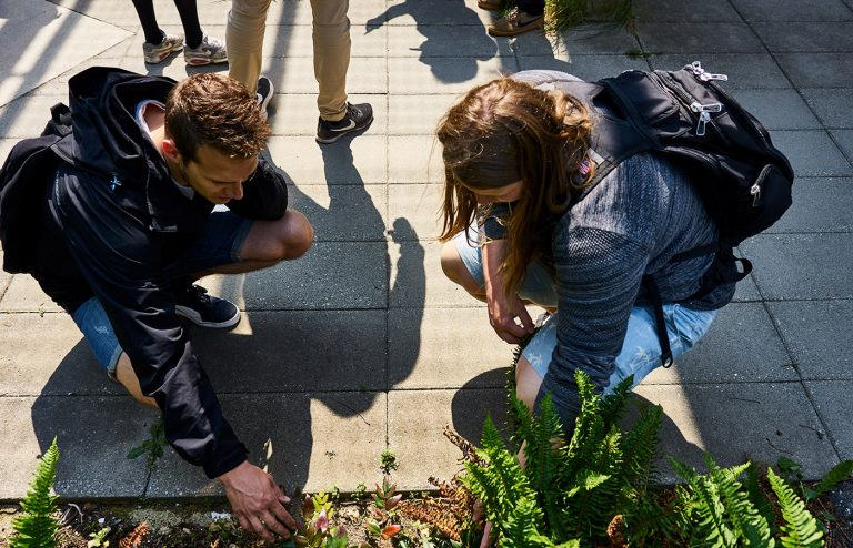 Students inspecting plants