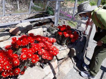 FOGs inspect brilliant red flowers in Alpine Garden