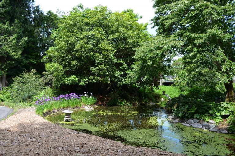 Pond in the Asian Garden