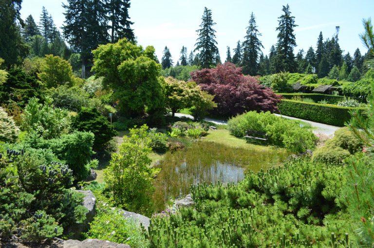 Pond in the Alpine Garden