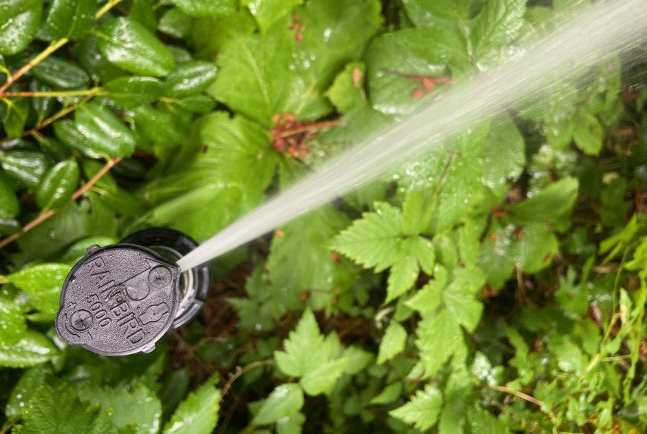 Sprinkler sprays water across shrubs