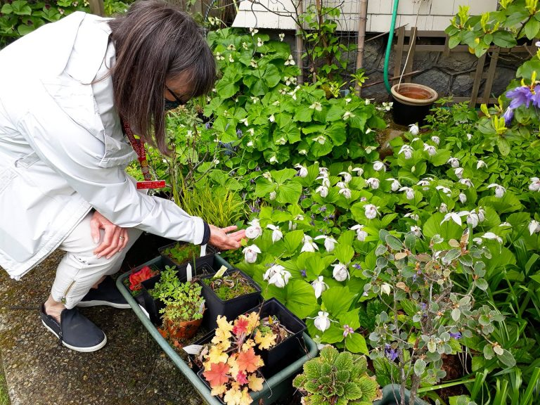Ronda kneeling to inspect pots of trillium